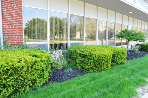 Commercial Shrub front