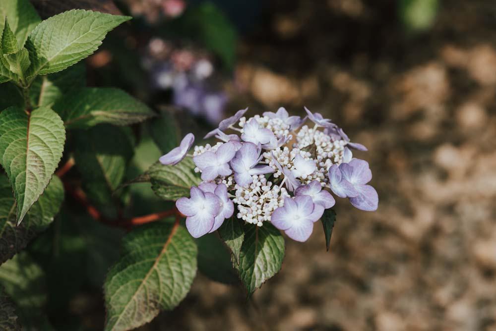 Michigan native plant